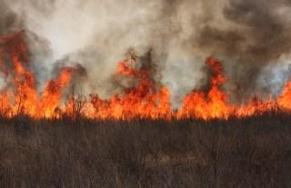 Wildfire image via Shutterstock