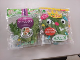 """Packaged """"plant factory""""-grown greens are sold in Japan as a premium product–consistent quality and sustainably-grown."""