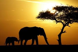 Image via Shutterstock