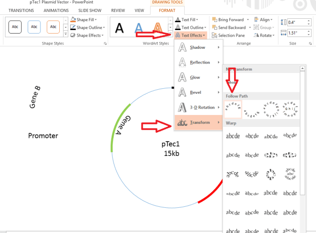 Annotations - Plasmid designing using PowerPoint