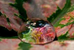 a magnification of a water drop on a leaf