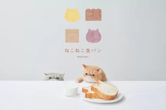 ねこねこ食パンについて
