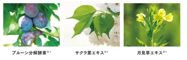 世田谷自然食品、SEAC(シーク)シワ改善BBクリーム