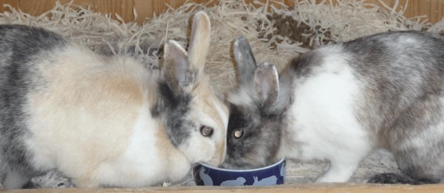 Kaninchen, Taster und Lean-Management