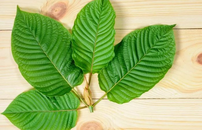 How to use Kratom for Alcohol Withdrawal