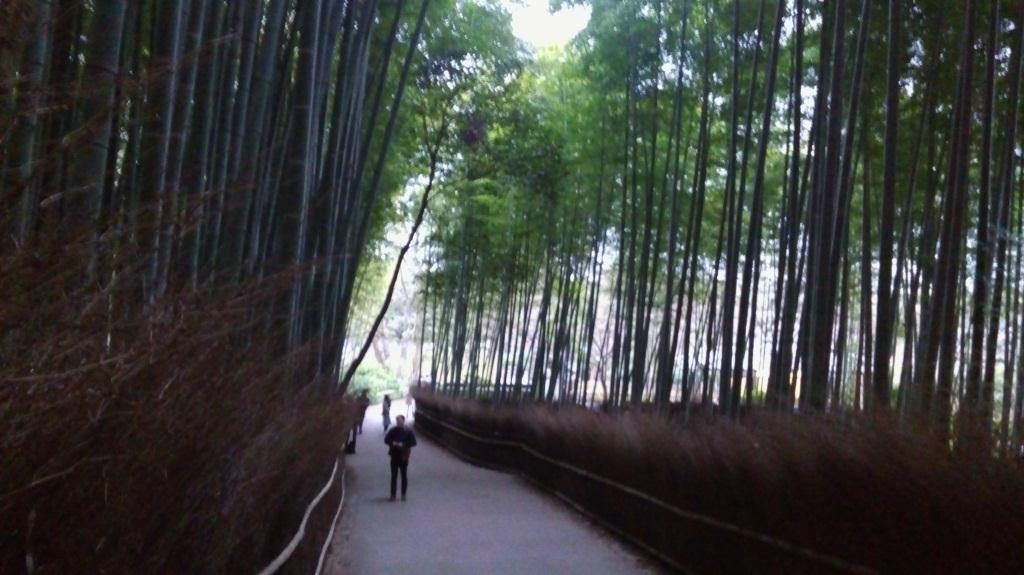 Hutan bambu yang terkenal