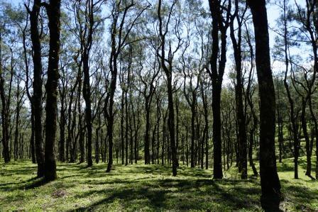 Hutan Fatumnasi