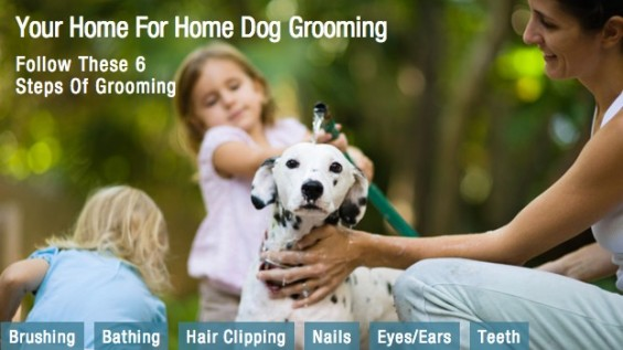 Wahl Home Dog Grooming