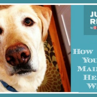 How to Help Your Dog Maintain a Healthy Weight #Infograph