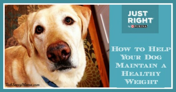How to Help Your Dog Maintain a Healthy Weight. Tips and an infograph on TechSavvyMama.com