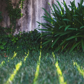 8 Tips for Maintaining a Mosquito-Free Yard This Summer