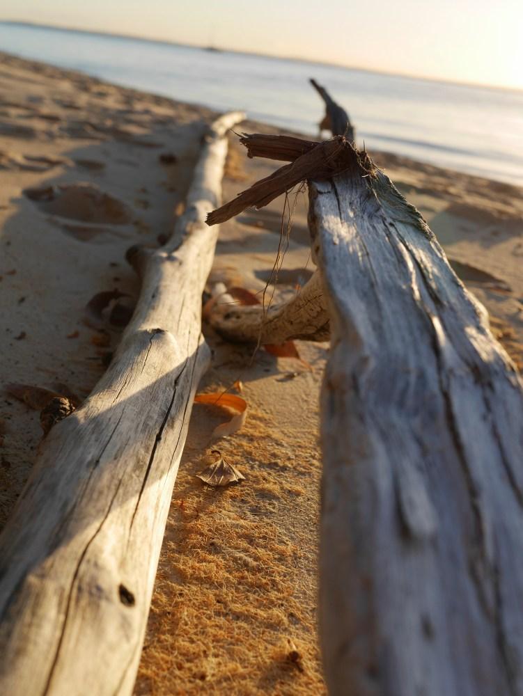 Fraser-Island-Kingfisher-Bay-trees