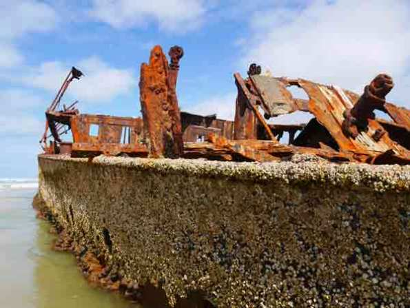 Fraser-Island-Maheno-shipwreck-barnacles