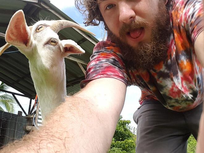panorama goat