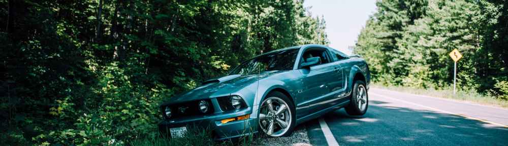 photo of mustang on side of the road