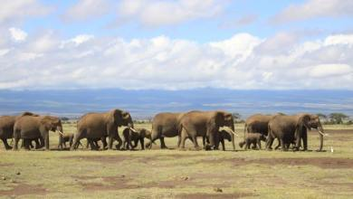 Photo of Conservationists petition Yahoo to stop selling Elephant ivory online