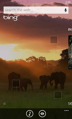 Bing Masai Mara elephants