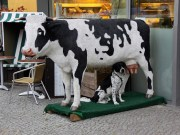 Cow on sale