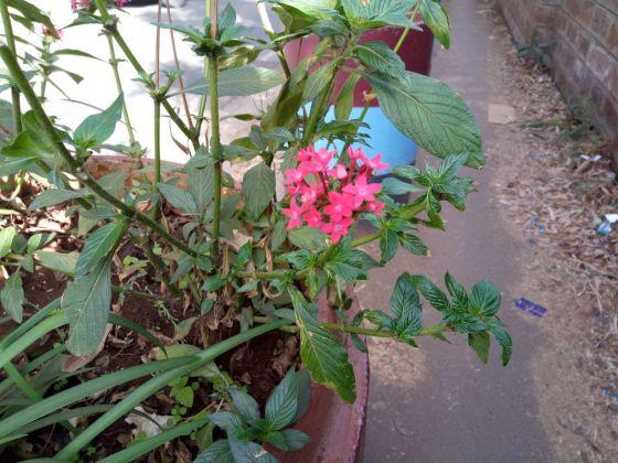 Lava Z81 flower 2