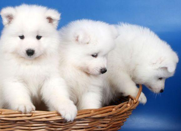 3 lindos filhotes de cachorros