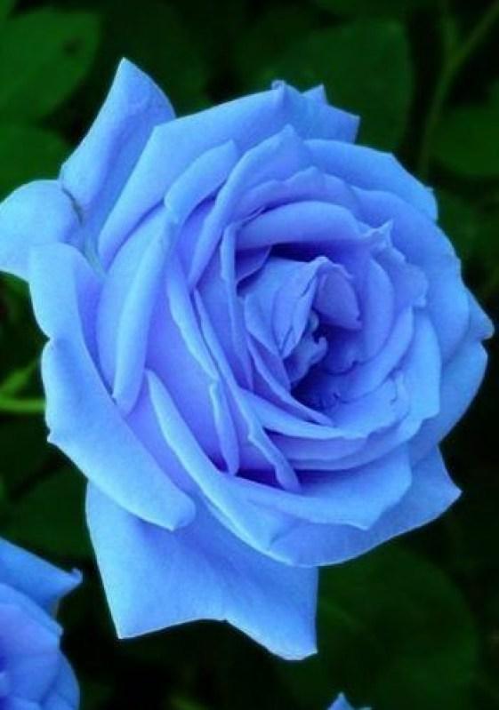 o mais lindo azul