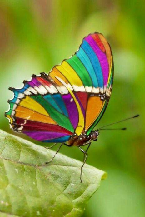 parecida com o arco-íris