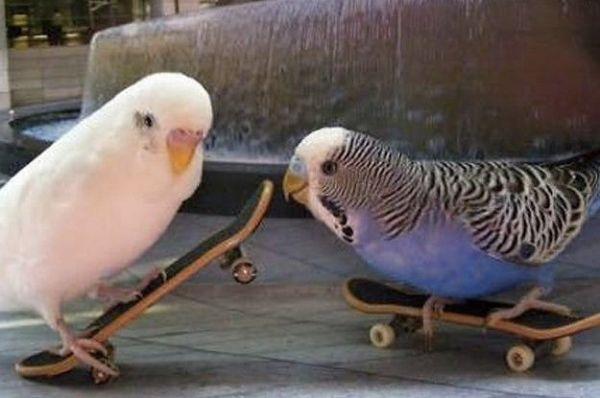 Imagem de animais andando de skate aleatório.