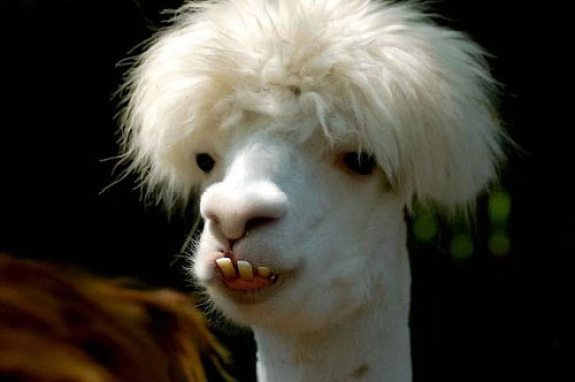 Fotos engraçadas de animais meu cabelo minha vida