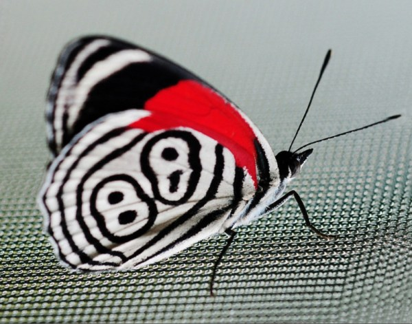 borboleta linda 88