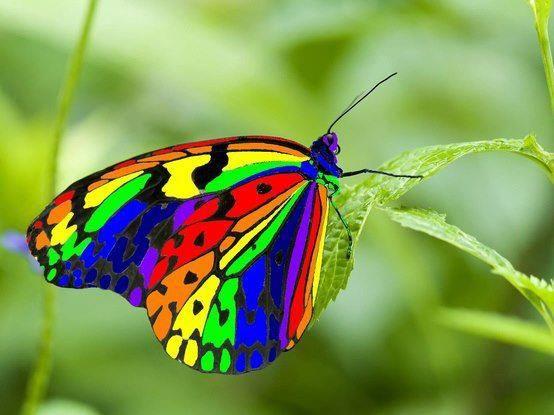 da cor do arco-iris