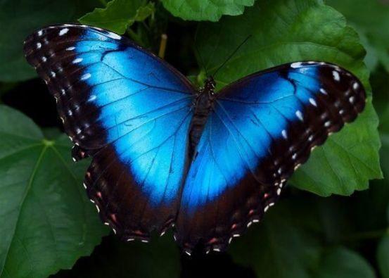 azul com preto