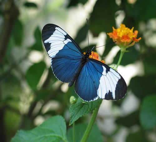borboleta super linda