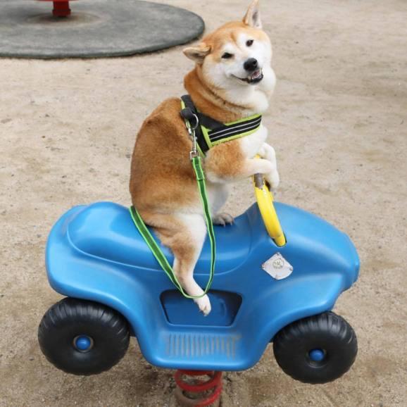 Cachorro engraçado andando no carro