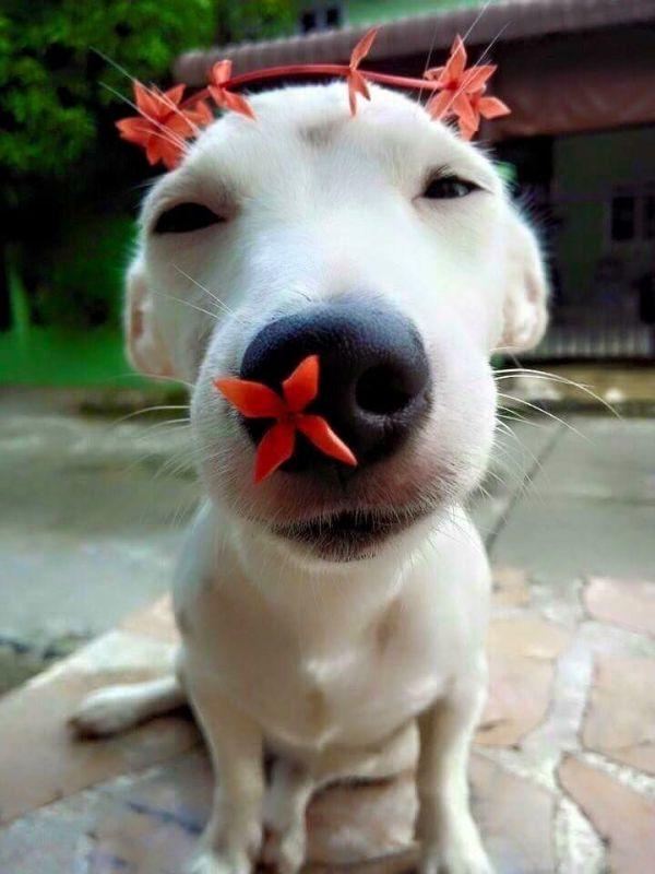 Cachorro engraçado e romantico