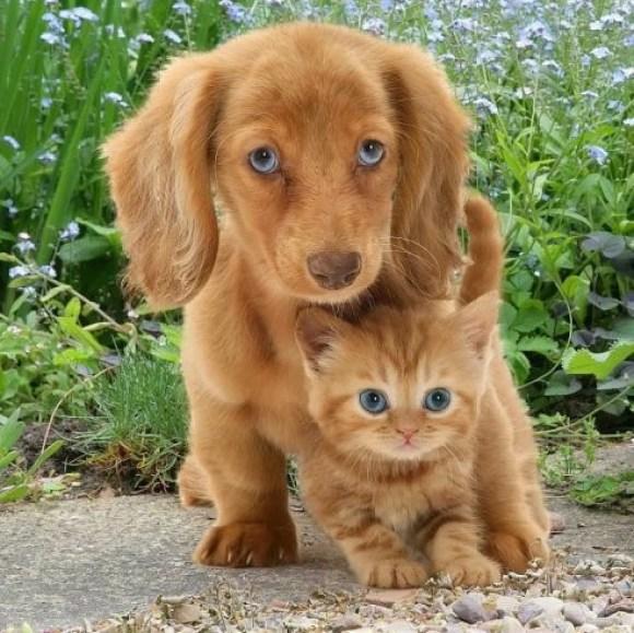 Cachorro fofo com o gato