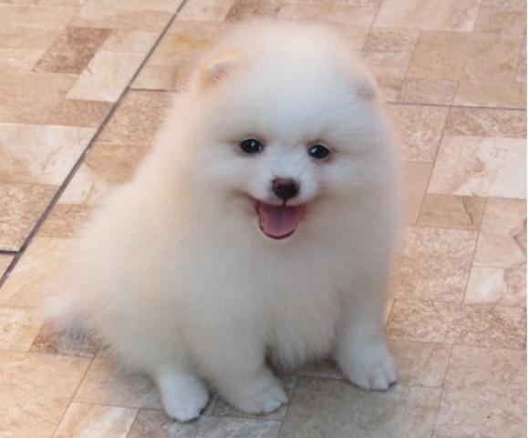 Lindos cachorros adoráveis