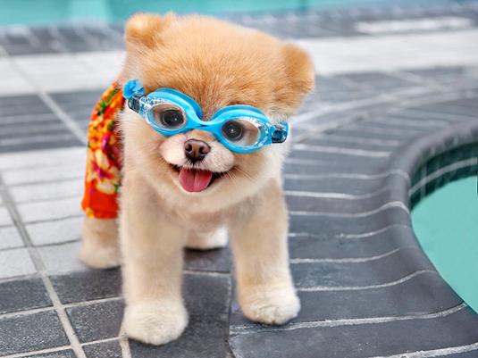 Cachorros lindos fotos