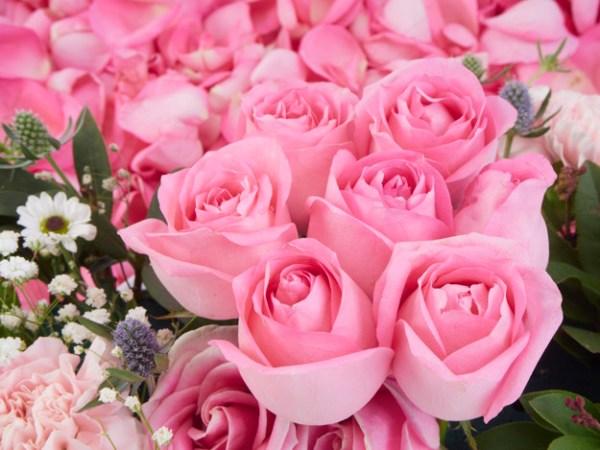 rosa são muito rosa