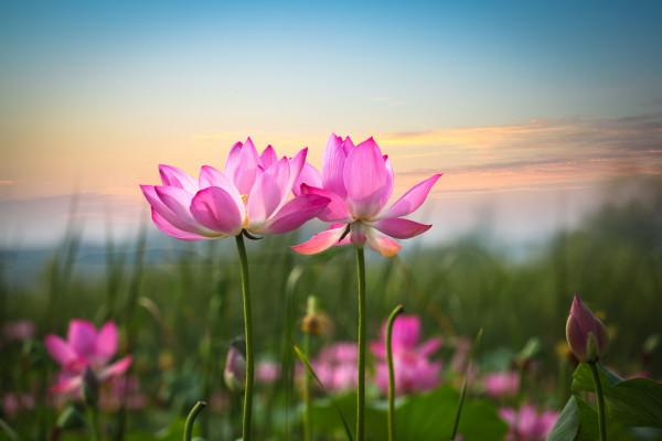 flor linda e delicada