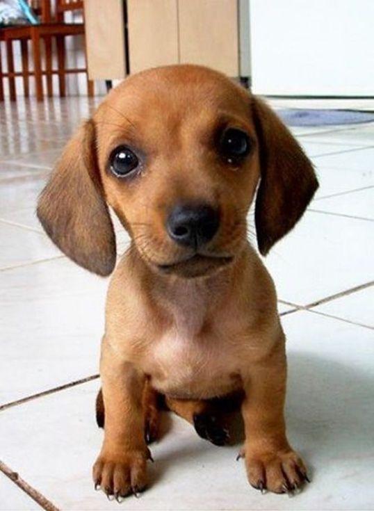 Foto linda de um pet