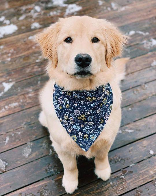 Fotos de cachorros lindos