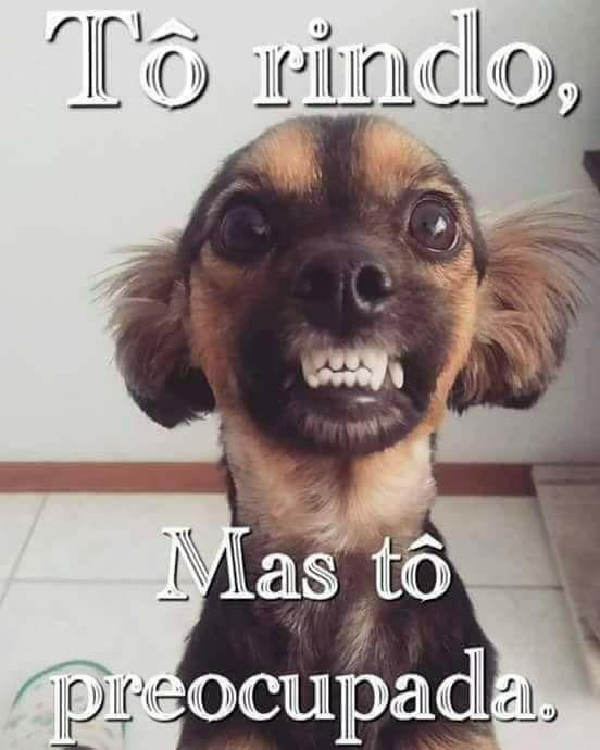 Fotos engraçadas cão nervoso