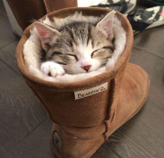 gatinho na bota