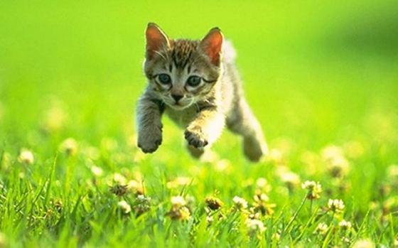 gatinho voando