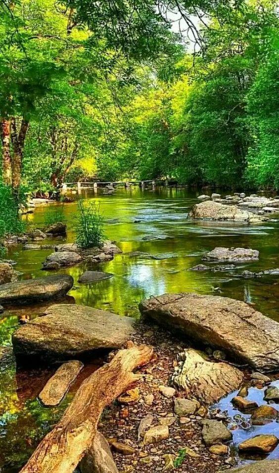 Perfeita imagem da natureza