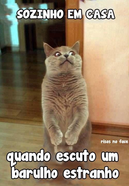 Um gatinho assustado.