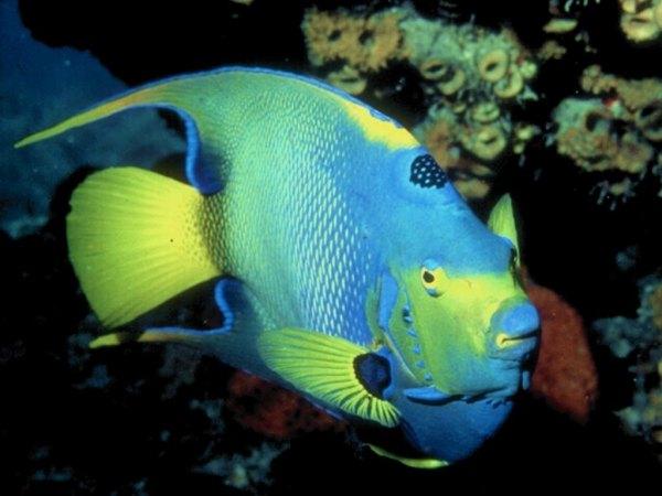 peixe do fundo do mar.