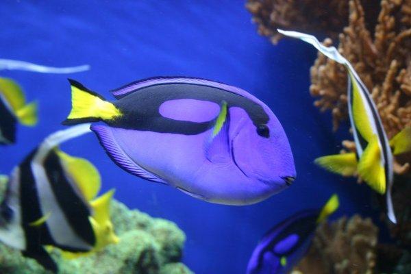 peixe lindo do mar
