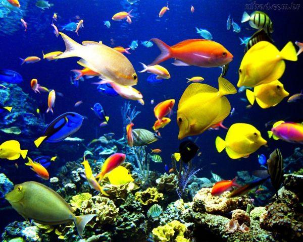 Cardume de peixe coloridos domar