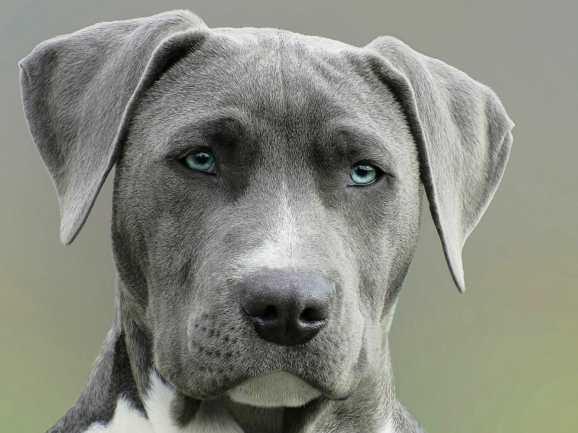 Imagem linda de cachorro adorável